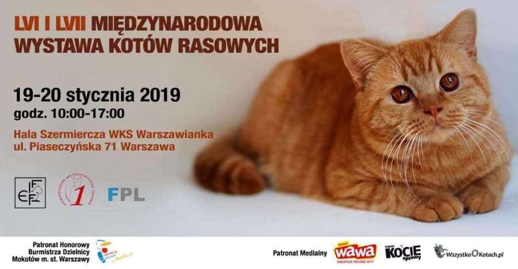 Międzynarodowa Wystawa Kotów Rasowych (+ targi zoologiczne) 19 i 20.01.2019 w Hali Szermierczej