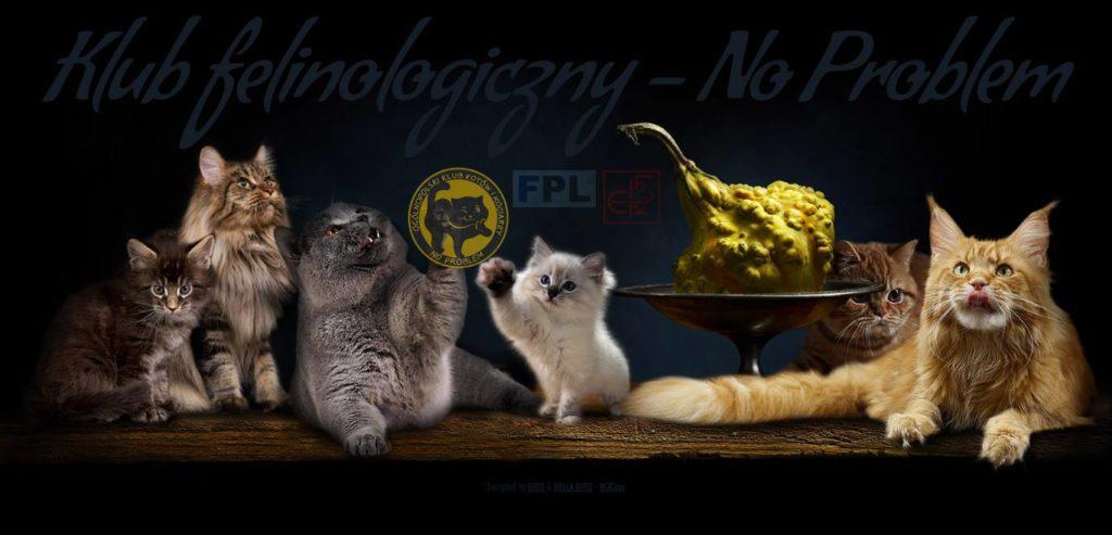 Międzynarodowa Wystawa kotów Rasowych Warszawa Środowiskowa – 11 i 12 maja 2019