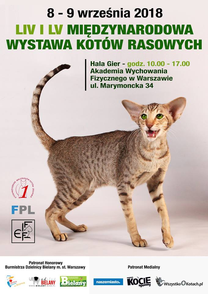 Międzynarodowa Wystawa Kotów Rasowych 8 i 9 września 2018 r. w Hali Gier Akademii Wychowania Fizycznego w Warszawie