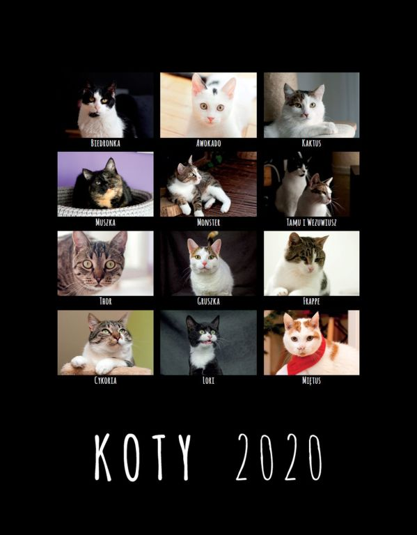 Charytatywny kalendarz DT Kocia Łapka 2020