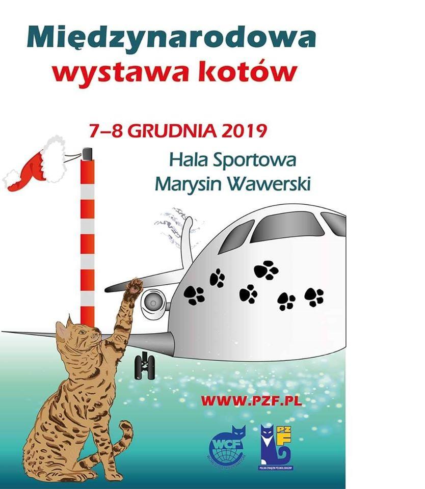 Międzynarodowa Wystawa Kotów Rasowych – Hala Sportowa SP nr 195 w Warszawie – będziemy tam 7 XII 2019
