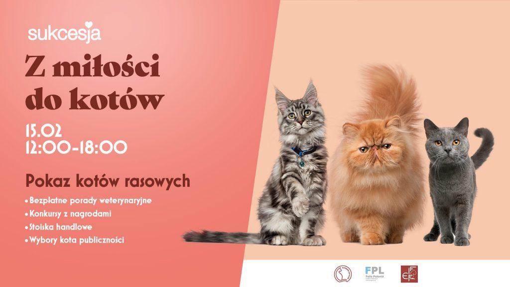 Kocia Łapka w Łodzi – 15.02.2020 – na stoisku drapacze.pl