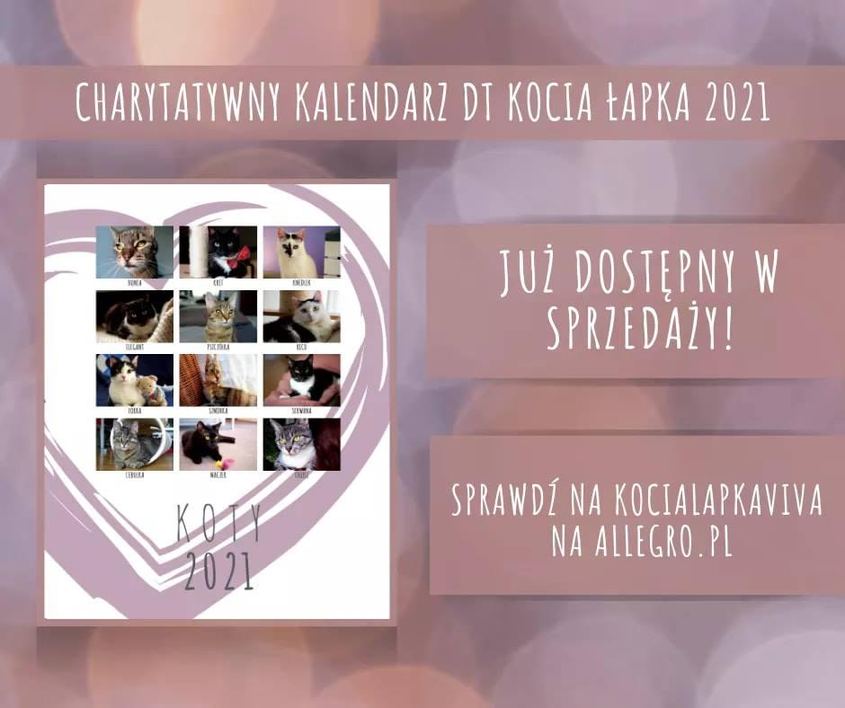 Charytatywny kalendarz DT Kocia Łapka 2021