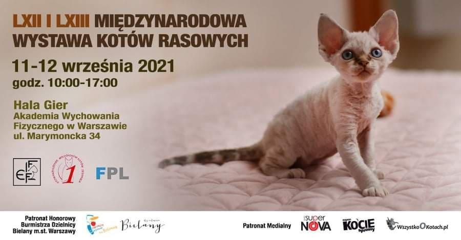Wystawa Kotów Rasowych – Hala Gier AWF – 11-12.09.2021 – stoisko charytatywne